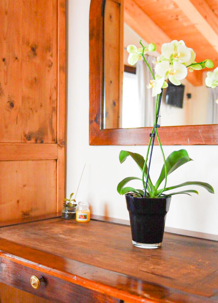Camera con orchidea
